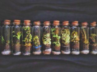 Mini Bottle Terrarium